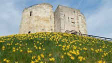 Early daffodils on Cliffords Tower in March