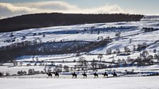 Racehorses at Middleham in March