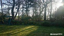 Sunlight breaks through the trees in Worstead