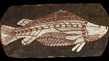 Bark painting of a barramundi