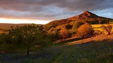 Bluebells under Roseberry Topping at sunset