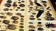 A beetle box from the Natural History Museum. Beetles are incredibly diverse and make up 40% of all animal species.