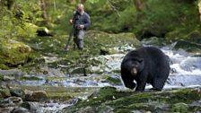 Black bear arrival