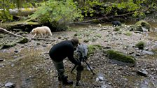 Filming a bear family