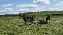 Mowing by horsepower at Haydon Bridge