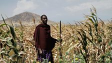 Maasai farmer and warrior Richard must stop elephants from raiding the village crops, without harming them