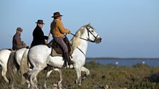 Camargue Cowboys ride an ancient breed of horse to round up the bulls they ranch for bloodless bullfighting in nearby arenas