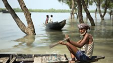 Local people living in this vast mangrove swamp supplement their income by hunting for honeycombs in the forest