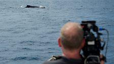 Cameraman Scott Tibbles spots a humpback whale in the Sea of Cortez