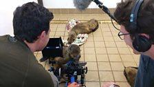Tom Payne and Will Goldenberg filming sick sea lions at Pacific Marine Mammal Center, Laguna Beach, California