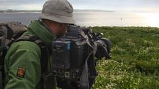 Richard on the Farne Islands filming Eider duck chicks as they make their way down to the sea under attack from herring gulls