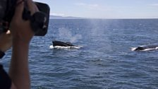 A humpback has a good look at the cameras as it passes the boat.