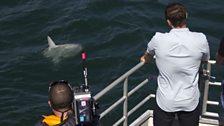 A Mola or Sunfish passes cameraman Jonny Rogers.