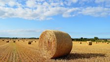 Harvest in Northumberland