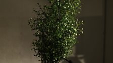 Cathy van Eck's 'performance project for a sounding tree' with plant and hairdryer
