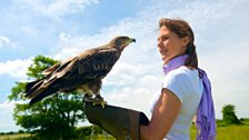 Eye-to-eye with Sasha the eagle, a bird that filters out UV to maintain extremely sharp vision
