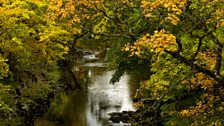 Autumn leaves in Wear valley