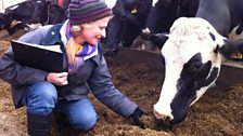 Anna Hill with Farming Today's adopted cow Alkerton Jeeves Sunblest
