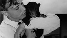 Handling Benjamin the bear cub while working on Zoo Quest for a dragon