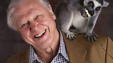 Another lemur joins Sir David while working on Life of Mammals
