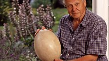 Sir David Attenborough with a giant egg working on Life on Air
