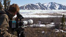 Cameraman Max Hug-Williams films migrating caribou