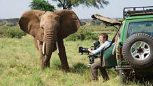 An adolescent elephant investigates cameraman Max Hug-Williams