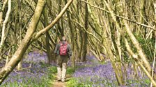 Glad in Ashley Heath sent in this photo of a walker making his way through some bluebells in the woods