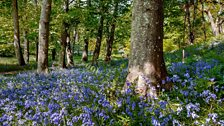 Brian spotted these bluebells in Freshwater