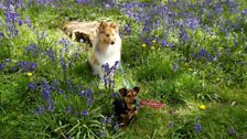 Christine in Fareham snapped these two among the bluebells
