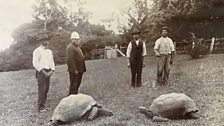 Earliest known photograph of Jonathan the 182 year old tortoise, taken in 1886