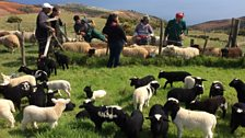 The shepherds annual gathering