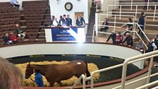 The Derby Sale at Tattersalls in Kildare