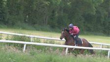 Racehorse Training