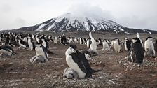 The largest penguin colony in the world