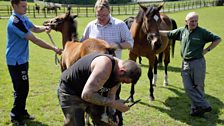 Floors stud Groom David Trouten and his team with foal 'Sunshine' and farrier David Merry