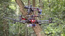A camera drone moves carefully between the trees to give a birds-eye view of the jungle.