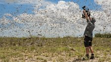 Rob Drewett filming in the middle of a swarm of a billion flying locusts.