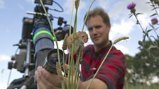 Cameraman Jonathan Jones focuses his lens on a harvest mouse climbing grass stems.