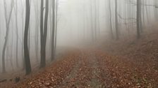 November in the Viennese Forest
