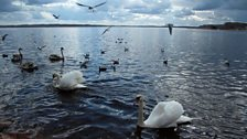 The Pskov region: 'The Land of Three Thousand Lakes'