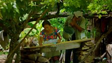 Don Roque and his wife Doña Zou tender their forest garden in a way little changed since the time of their ancestors
