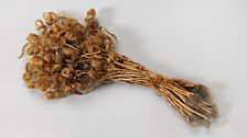 Lock of bound hair from the Pacific island nation of Vanuatu