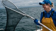 The nets are used to get the bass from the line