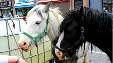 It wouldn't be the May Fair without horses