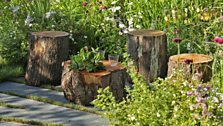 Fruit trees, log piles, shelter for wildlife, shaggy lawns and informal planting are the key elements of this garden