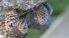 Moch coed yn tyfu ar foncyff ger argae Maentwrog ar lan Llyn Trawsfynydd - Keith O'Brien.