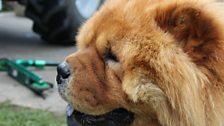 Even the pups were loving Hugo D