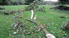 Effeithiau storm Helene ar goed a llwyni Llanelwy.