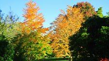 Tymor yr Hydref yng ngerddi Bodnant, Dyffryn Conwy, Tudur Aled Davies.
